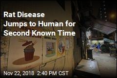 World's Second Case of Rat Hepatitis in Human Detected