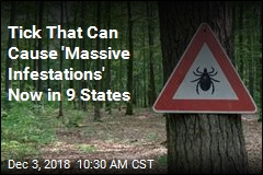 Tick That Can Cause 'Massive Infestations' Now in 9 States