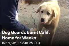 Dog Guards Burnt Calif. Home for Weeks
