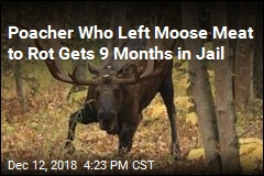 Moose Poacher in Alaska Gets 9 Months in Jail