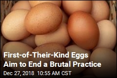 First-of-Their-Kind Eggs Aim to End a Brutal Practice