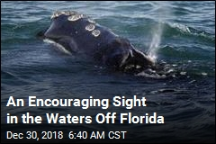 An Encouraging Sight in the Waters Off Florida