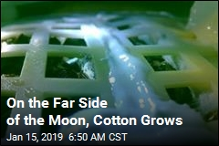 First Seeds Sprout on the Moon