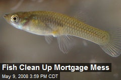 Fish Clean Up Mortgage Mess