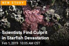 Warmer Ocean Spells Doom for Starfish