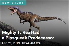 Mighty T. Rex Had a Pipsqueak Predecessor