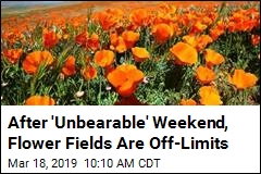 After 'Unbearable' Weekend, Flower Fields Are Off-Limits