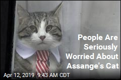 People Are Seriously Worried About Assange's Cat