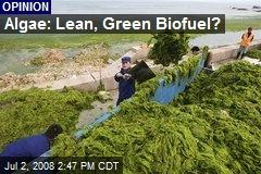 Algae: Lean, Green Biofuel?