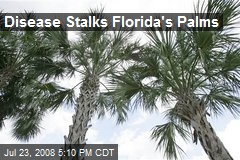 Disease Stalks Florida's Palms