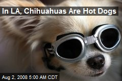 In LA, Chihuahuas Are Hot Dogs