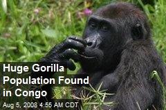 Huge Gorilla Population Found in Congo