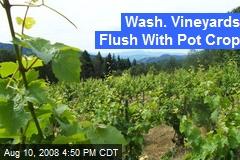 Wash. Vineyards Flush With Pot Crop