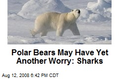 Polar Bears May Have Yet Another Worry: Sharks