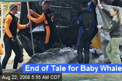 End of Tale for Baby Whale