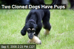 Two Cloned Dogs Have Pups
