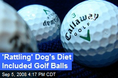 'Rattling' Dog's Diet Included Golf Balls