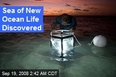 Sea of New Ocean Life Discovered