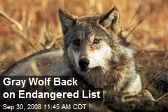Gray Wolf Back on Endangered List