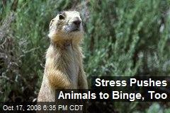 Stress Pushes Animals to Binge, Too