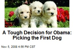 A Tough Decision for Obama: Picking the First Dog