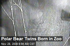 Polar Bear Twins Born in Zoo