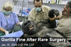 Gorilla Fine After Rare Surgery