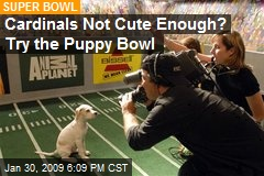 Cardinals Not Cute Enough? Try the Puppy Bowl