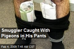 Smuggler Caught With Pigeons in His Pants
