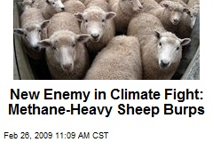 New Enemy in Climate Fight: Methane-Heavy Sheep Burps