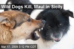 Wild Dogs Kill, Maul in Sicily