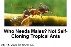 Who Needs Males? Not Self-Cloning Tropical Ants