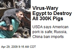 Virus-Wary Egypt to Destroy All 300K Pigs