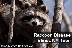Raccoon Disease Blinds NY Teen