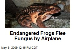 Endangered Frogs Flee Fungus by Airplane
