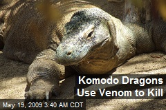 Komodo Dragons Use Venom to Kill