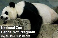 National Zoo Panda Not Pregnant