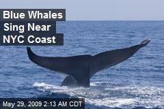 Blue Whales Sing Near NYC Coast