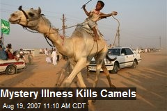 Mystery Illness Kills Camels