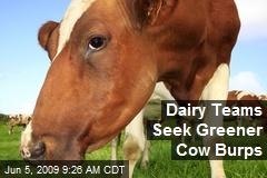 Dairy Teams Seek Greener Cow Burps