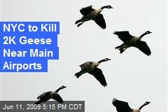 NYC to Kill 2K Geese Near Main Airports