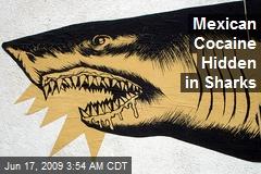 Mexican Cocaine Hidden in Sharks