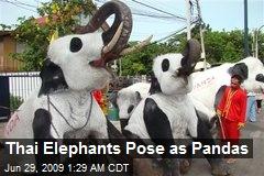 Thai Elephants Pose as Pandas