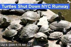 Turtles Shut Down NYC Runway