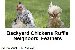 Backyard Chickens Ruffle Neighbors' Feathers