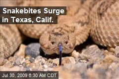 Snakebites Surge in Texas, Calif.
