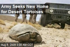 Army Seeks New Home for Desert Tortoises