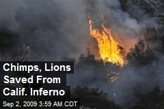 Chimps, Lions Saved From Calif. Inferno
