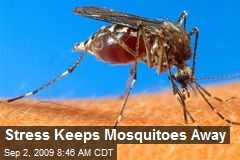 Stress Keeps Mosquitoes Away