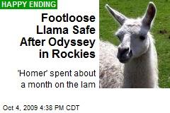 Footloose Llama Safe After Odyssey in Rockies